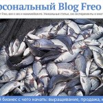 Рыбный бизнес — с чего начать и как организовать торговую точку